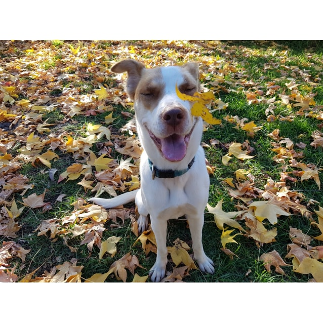 Photo of Lilly **On Trial With My New Family**