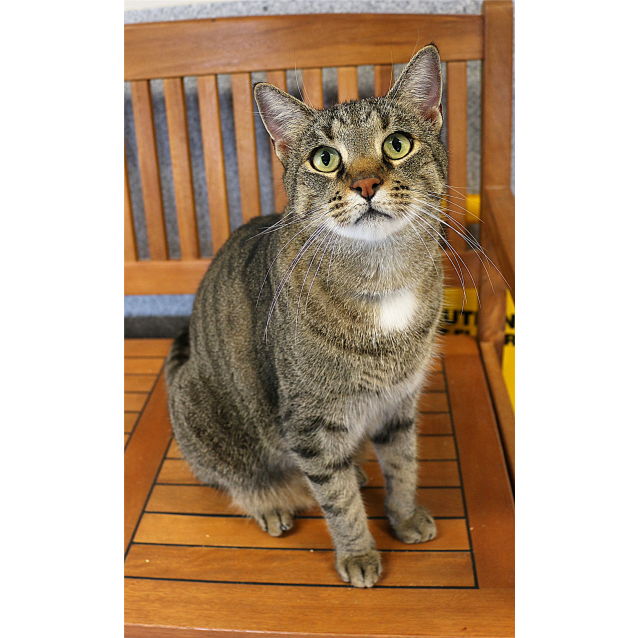 Photo of Mako