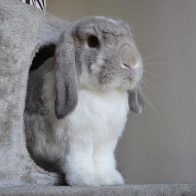 Photo of Thumper Scobi