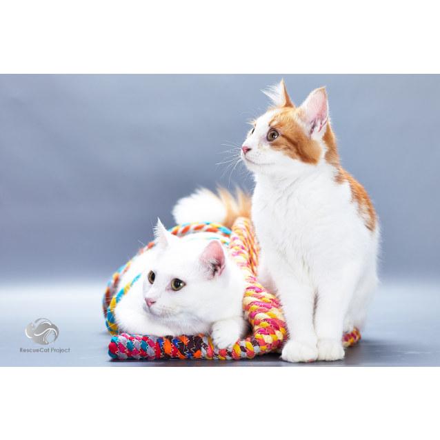 Photo of Tao & Jaffa