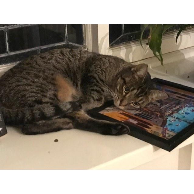 Photo of Mimi    Meet Me In Cat Lounge/Neko Hq Preston