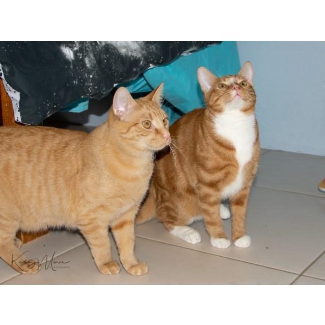 Photo of Ronald & Kurt