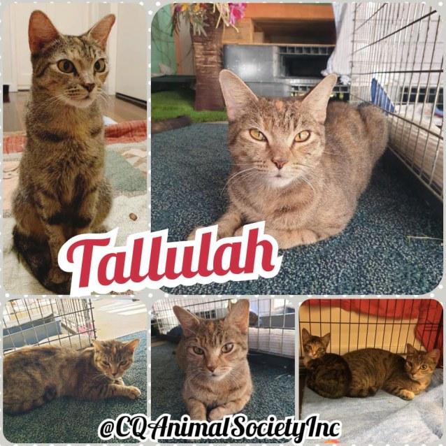 Photo of Tallulah
