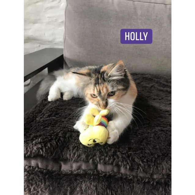 Photo of Holly, Ivy & Jingle