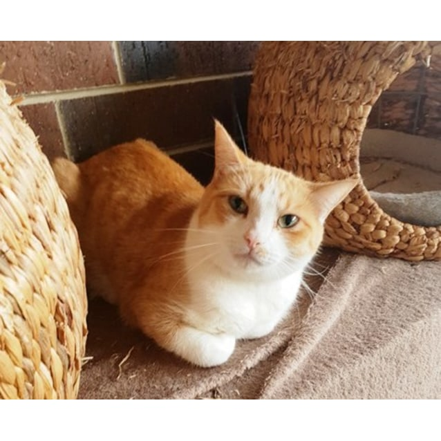 Photo of Hisoki