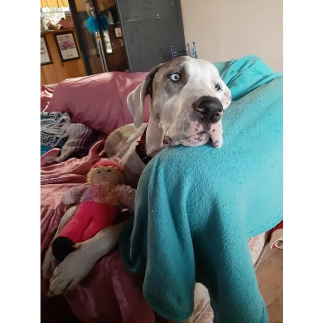 Photo of Dizzy
