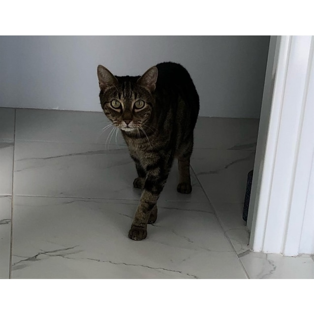 Photo of Twinky