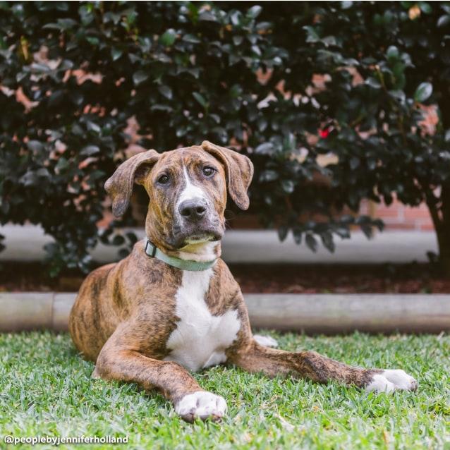Photo of Baxter The Super Smooch!