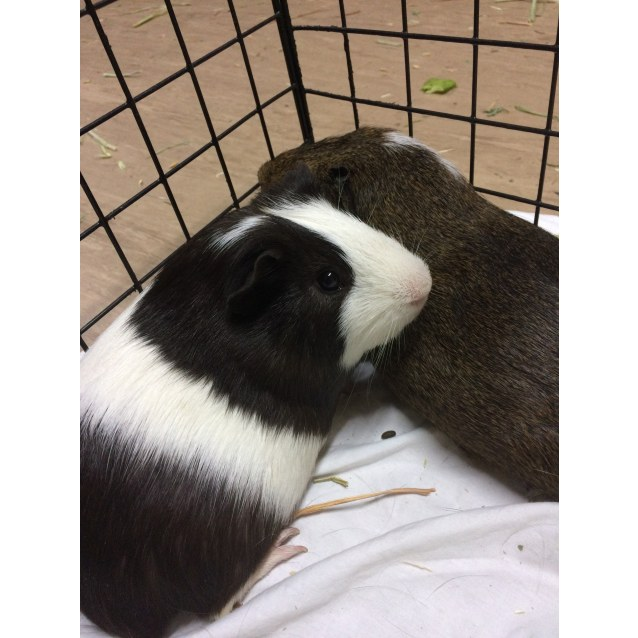 Photo of Barney And Buster