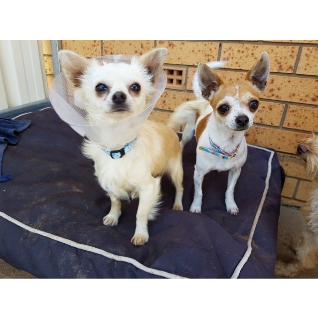 Photo of Patches And Matey