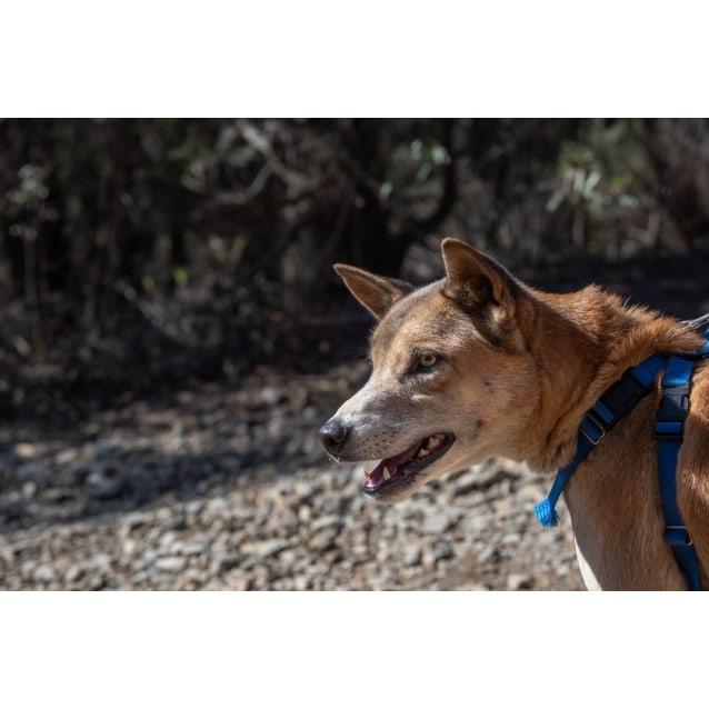 Photo of Esker   Dingo X