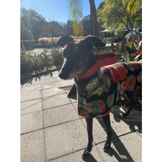 Photo of Dora, Melbourne
