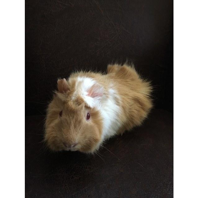 Photo of Foxy