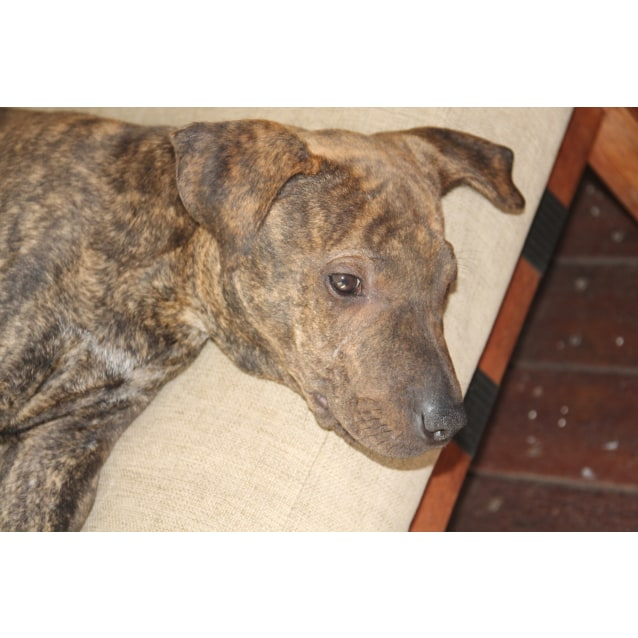 Photo of Leonard ~ Adoption Special $250 ~