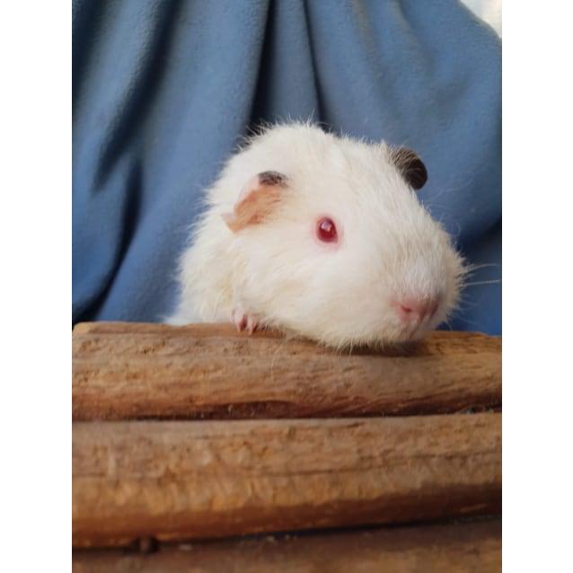 Photo of Abigail