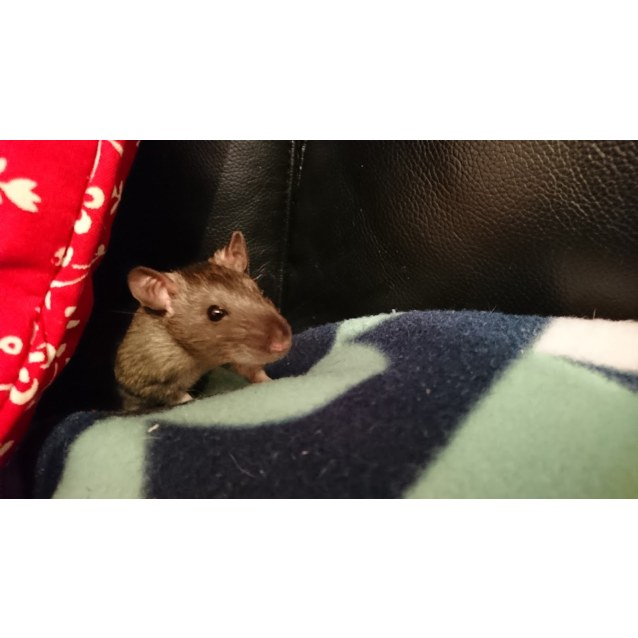 Photo of Possum, Roo & Brody