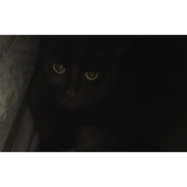Photo of Carmen / Yuki