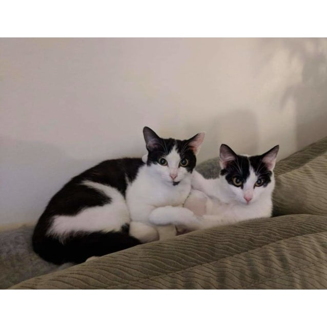 Photo of Gem And Rani