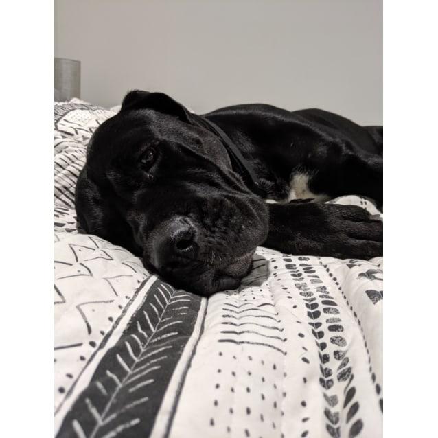 Photo of Kiki
