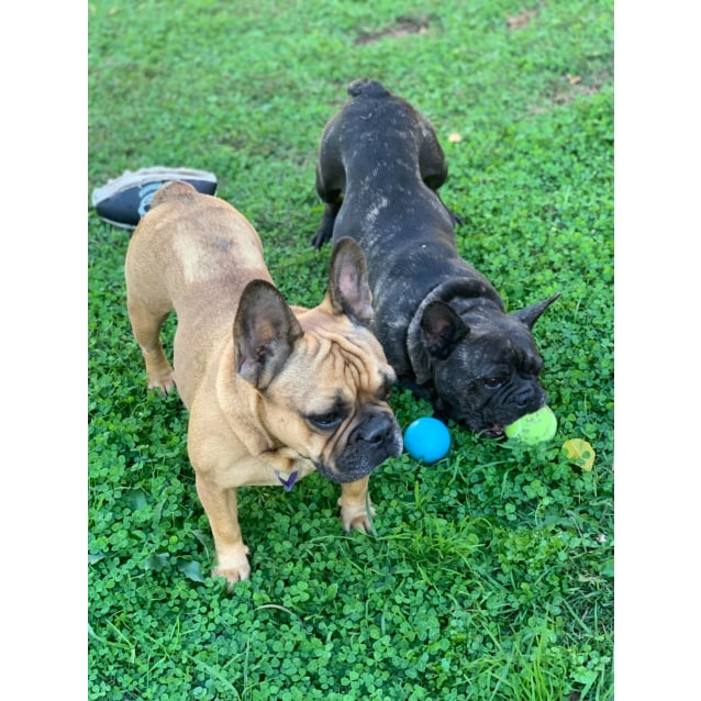 Photo of Millie & Olive (Bonded Pair)
