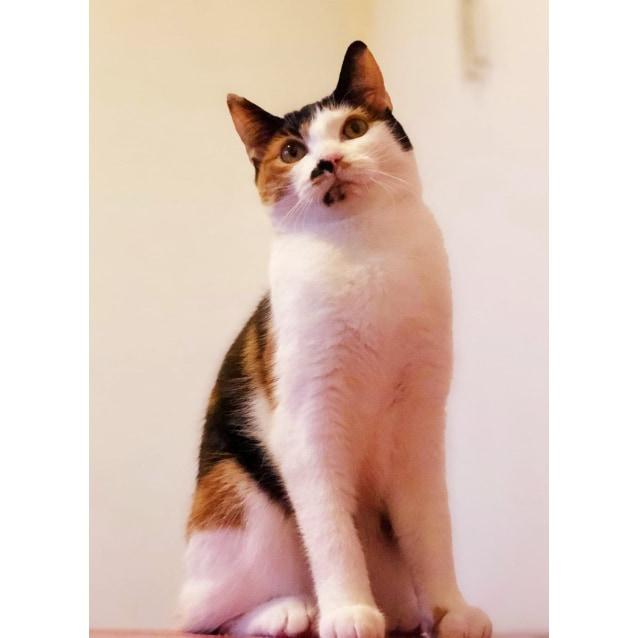 Photo of Spotty (Located In Boronia)