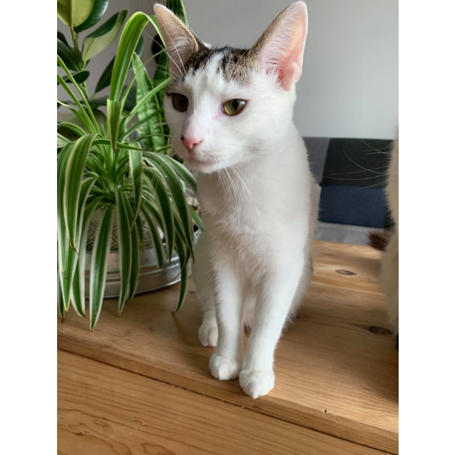 Photo of Lily (Located In Cheltenham)