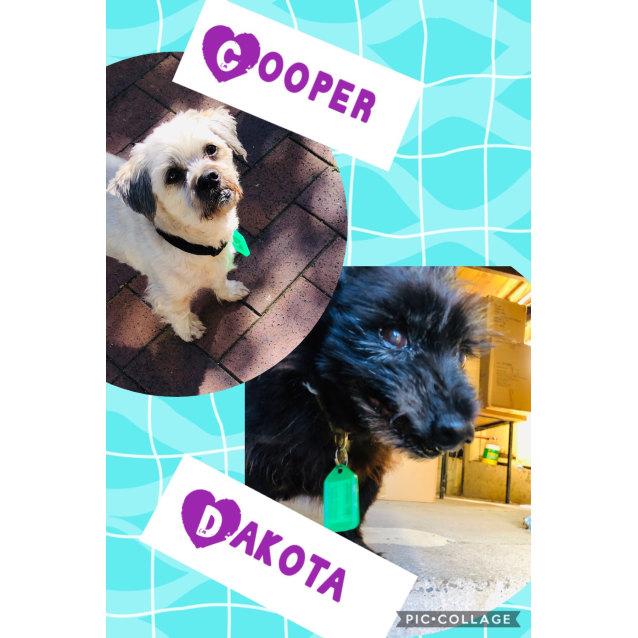 Photo of Cooper And Dakota 💏