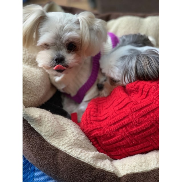Photo of Snuggles
