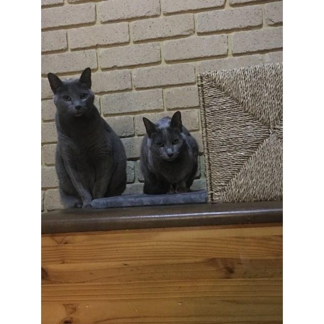 Photo of Nadia And Natasha * On Trial *