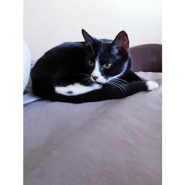 Photo of Stilton