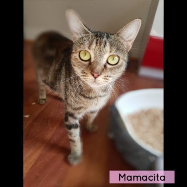 Photo of Mamacita