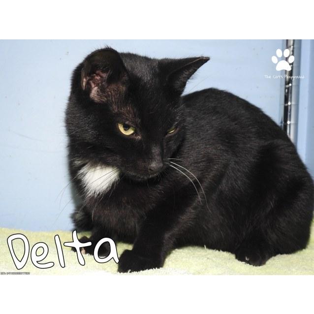 Photo of Delta