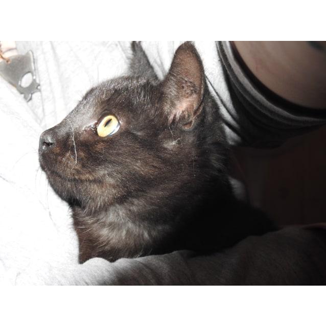 Photo of Osiris