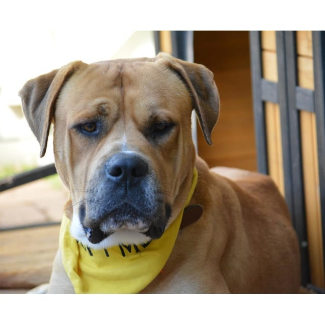 Photo of Rocky (Adoption Pending)