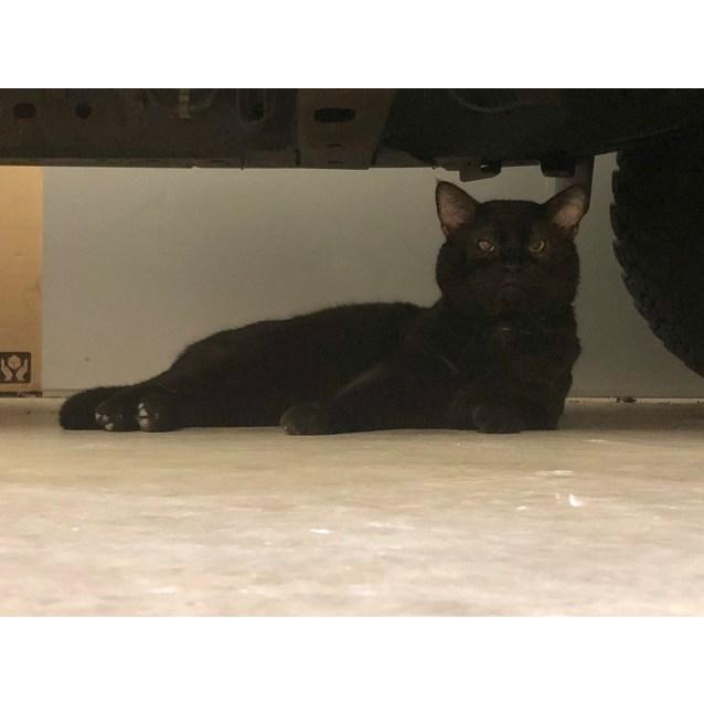 Photo of Bagheera