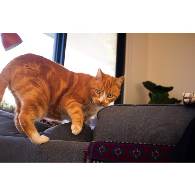 Photo of Buddy   Located In Northcote