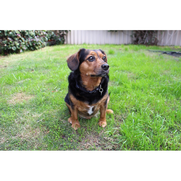 Photo of Max  * No More Calls Adoption Pending *
