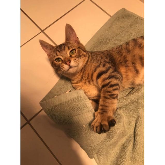 Photo of Solara
