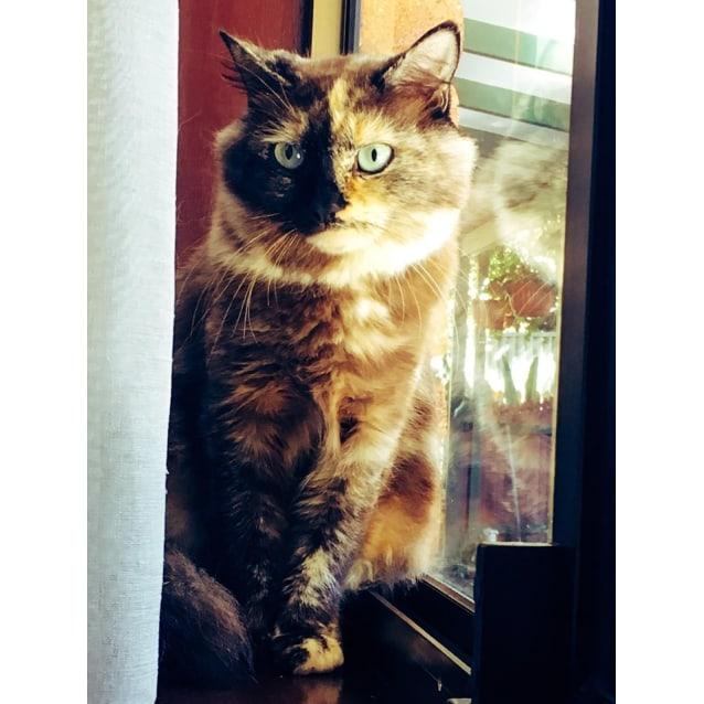 Photo of Tessa