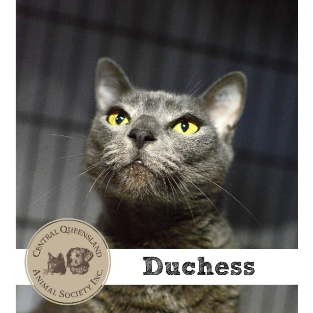 Photo of Duchess