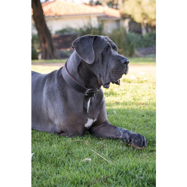 Photo of Saxon