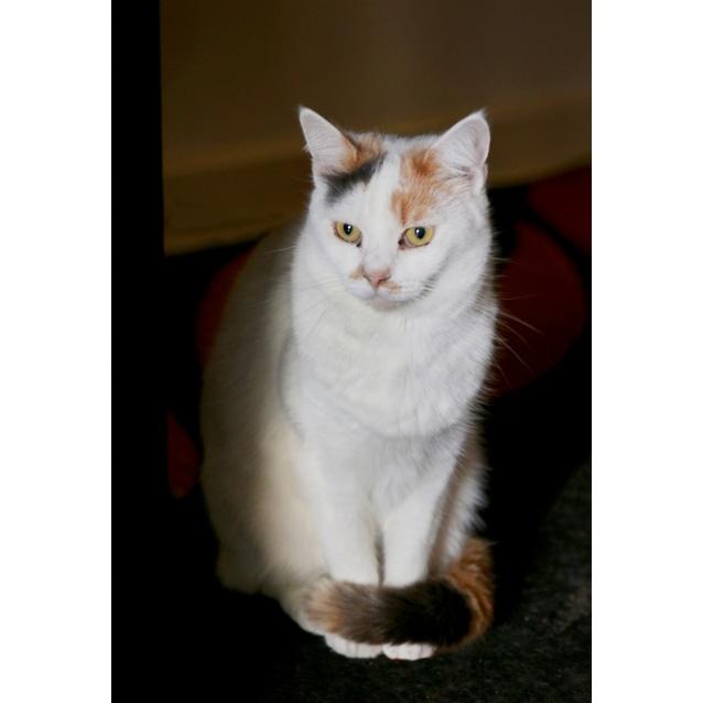Photo of Bridgett