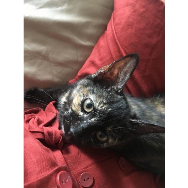 Photo of Myrtle