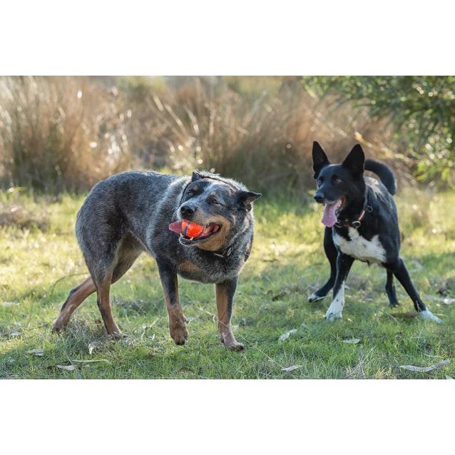 Photo of Bruce & Dougie