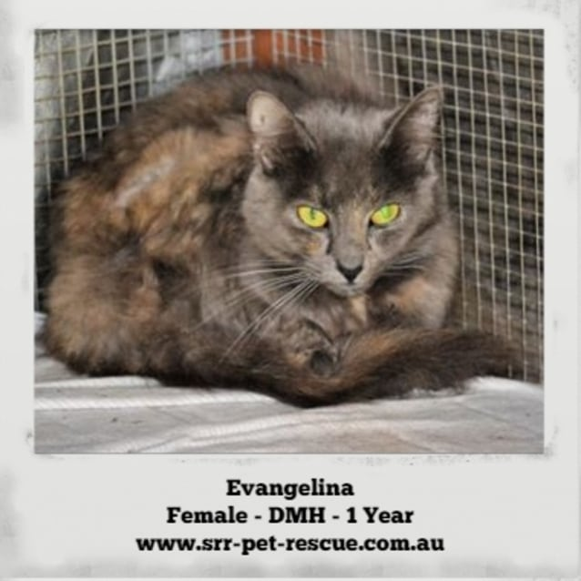 Photo of Evangelina