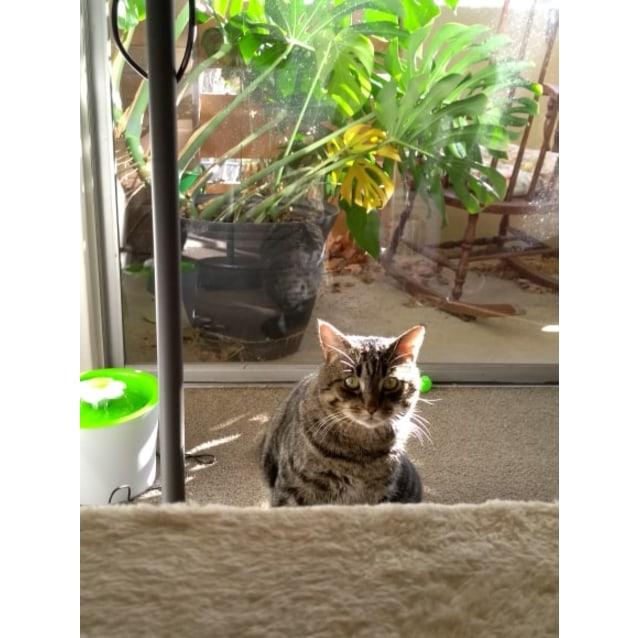 Photo of Lenny   Meet Me At Neko Hq/Cat Lounge Preston