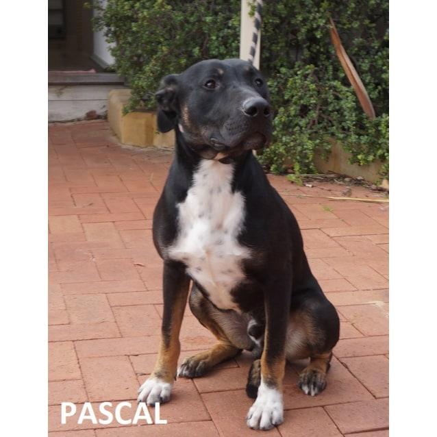 Photo of Pascall