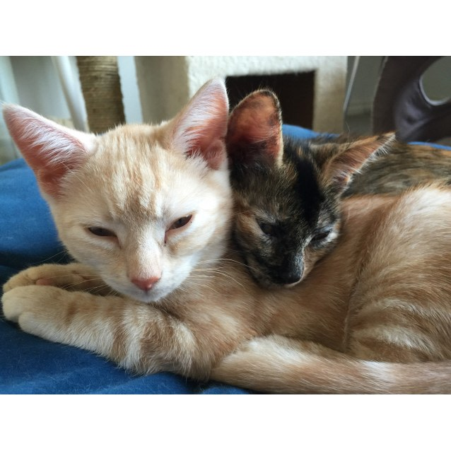 Photo of Caramel & Creampuff (Located In Frankston)