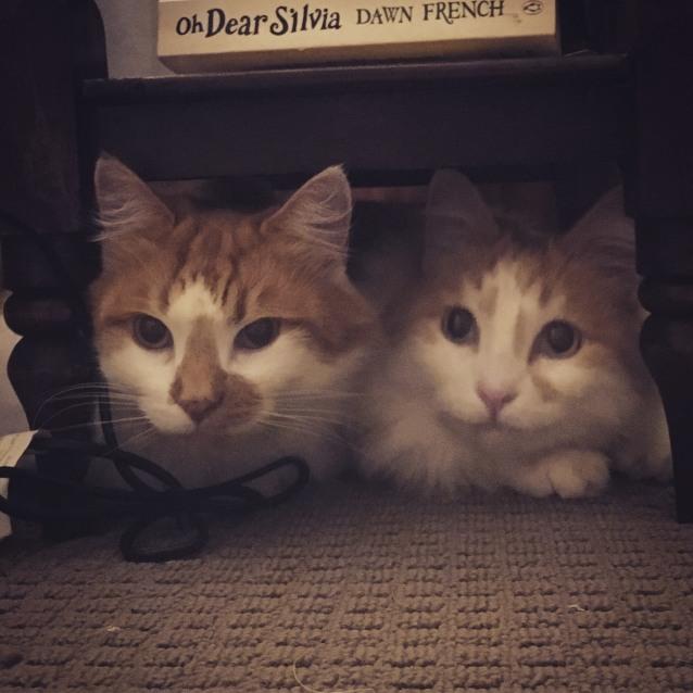 Photo of Tangerine And Mandarin *On Adoption Trial*