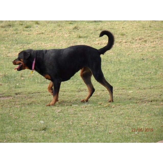 Photo of Rosie ** A Rosie Petal**